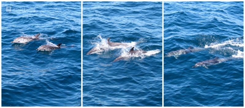 Aventura Marina Dolphin and Whale Watching Trip in Tarifa