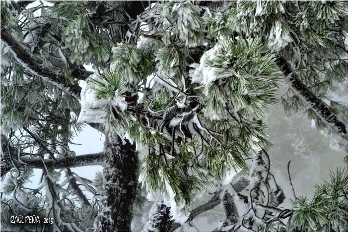 Snow in Estepona
