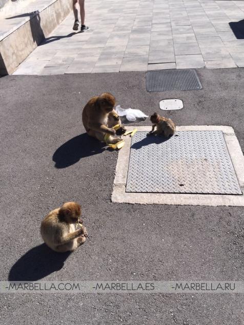Free-Range Monkeys - A Must-See in Gibraltar