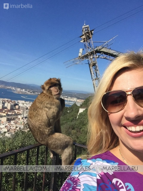 Free-Range Monkeys - A Must-See in Gibraltar