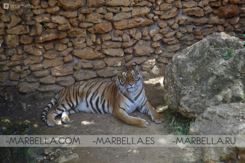 Annika's Blog: Castellar Zoo-Animal Rescue Centre