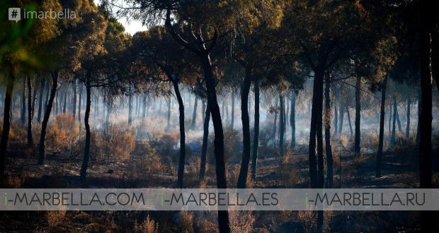 Fire in Moguer (Huelva) leaves more than 2000 affected, June 2017