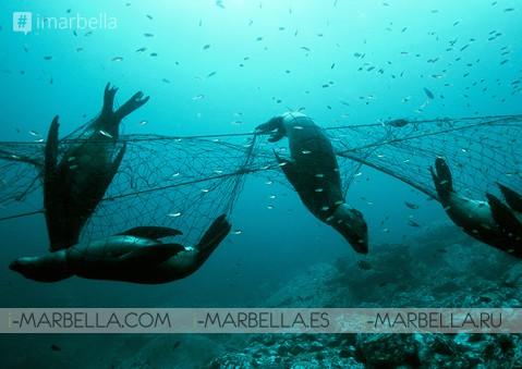Plastic Free Seas Clean-up @ La Cala Beach @ Spain, November's 24nd 2018