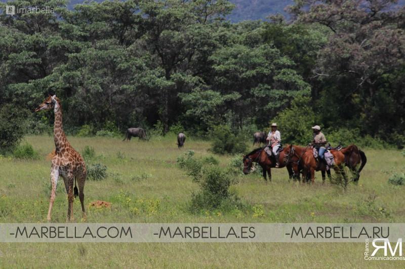 Out in Africa Encounters, el lujo del safari en África